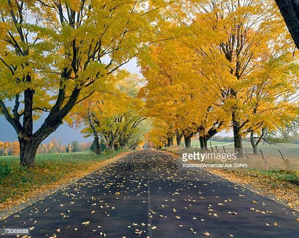 """""""Peacham, Road in Autumn, Vermont"""""""