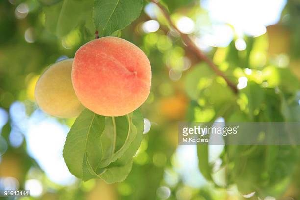 peaches - peach stock photos and pictures