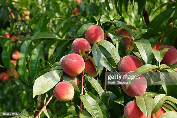 lower peach tree women Ncaa referee salary information for lower peach tree, alabama detailed salary analysis for ncaa referee in lower peach tree, al.
