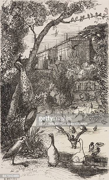 A peacock and geese in Jardin des Plantes engraving by Ernest Boetzel based on a drawing by Marie Braquemond from ParisGuide by leading writers and...