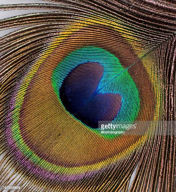 Macro de plume de paon
