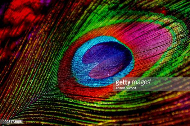 peacock feather - animal markings stock pictures, royalty-free photos & images