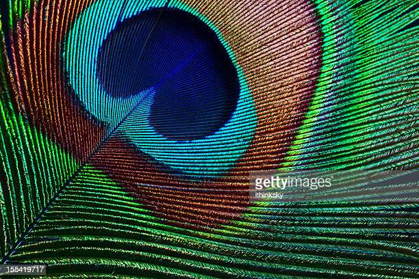 peacock feather - close up stockfoto's en -beelden