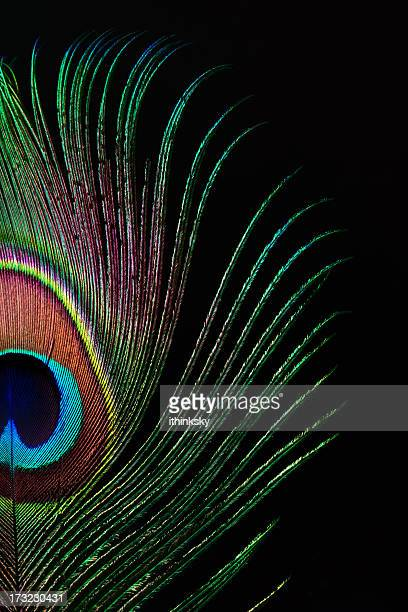 peacock feather - peacock stock pictures, royalty-free photos & images