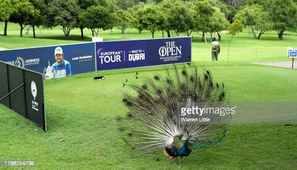 Peacock is pictured on the first tee on the Firethorn course ahead of the South African Open at Randpark Golf Club on January 08, 2020 in...