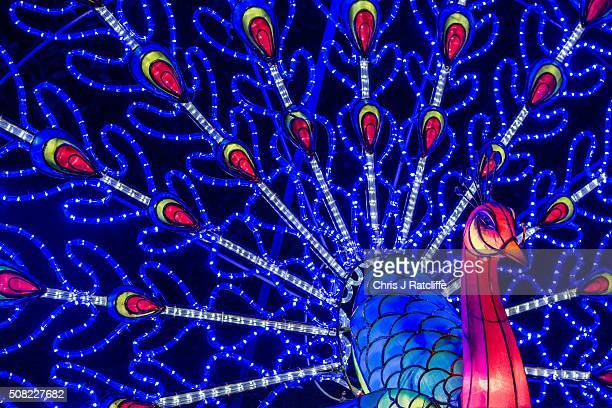 Peacock lanterns light up the night during the opening night of the Magical Lantern Festival at Chiswick House And Gardens on February 3 2016 in...