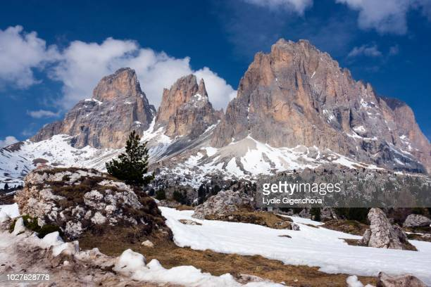 peak of langkofel or sassolungo from sellajoch or sella pass, passo sella, dolomites, italy - {{asset.href}} stock pictures, royalty-free photos & images