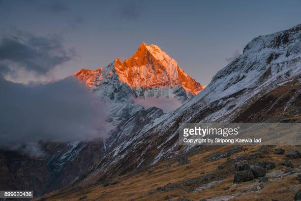 peak of the machhapuchhre (6,993 m.) with light painting during sunset from the annapurna base camp (abc). - felsspitze stock-fotos und bilder