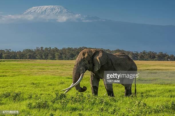 peak of the mt kilimanjaro - mt kilimanjaro stockfoto's en -beelden
