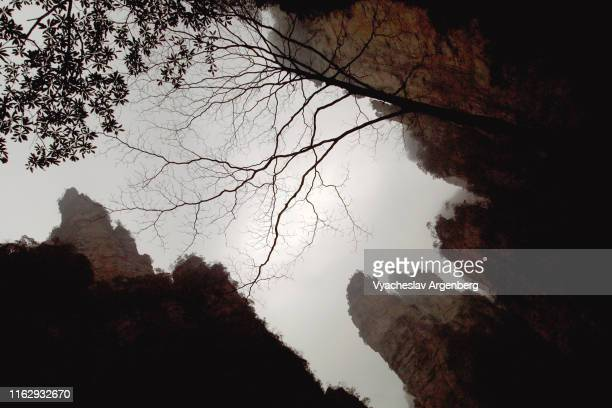 peaks and trees standing in dense fog, cloudy weather, hunan, china - argenberg stock pictures, royalty-free photos & images