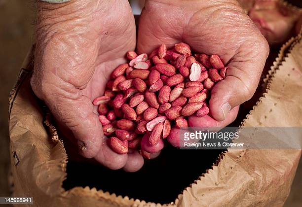 Peanut farmer Jerry L Hamill holds seed peanuts left over from planting his annual crop more than a month ago in Halifax North Carolina June 6 2012 A...