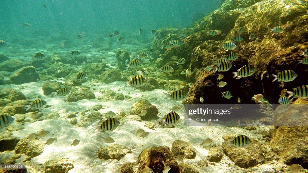 Peanut Island snorkeling : Stock Photo
