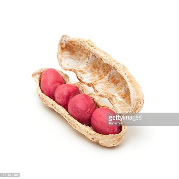 Amendoim isolado em fundo branco