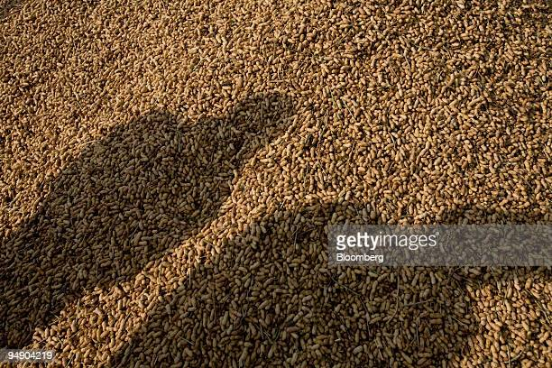 Peanuts are piled up for sale at an auction in an wholesale grain market on the outskirts of Jaipur India on Monday Jan 28 2008 Indian farmers...