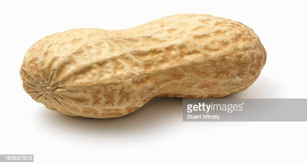 peanuts in shell on white background - nutshell stock photos and pictures