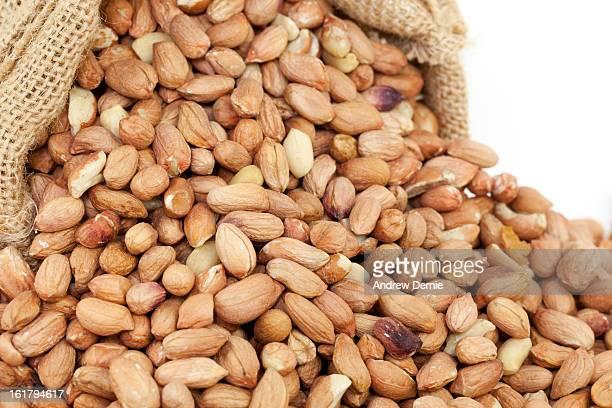 peanuts (bird nuts) - andrew dernie fotografías e imágenes de stock