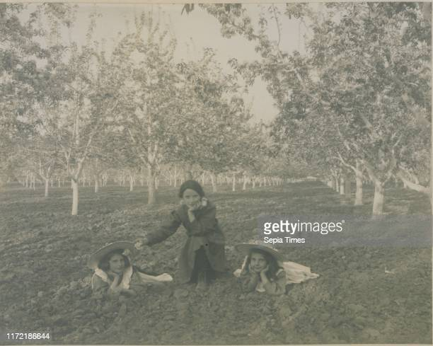 Pear blossoms in Mr. Stirling's orchard, Kelowna, British Columbia, 1909