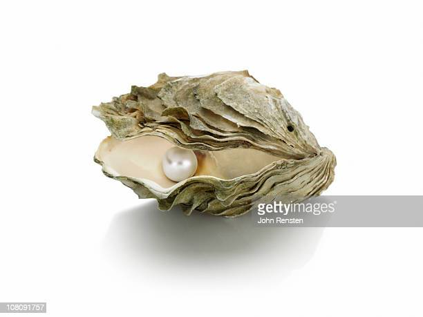 pearl and oyster shells - oyster pearl stock photos and pictures