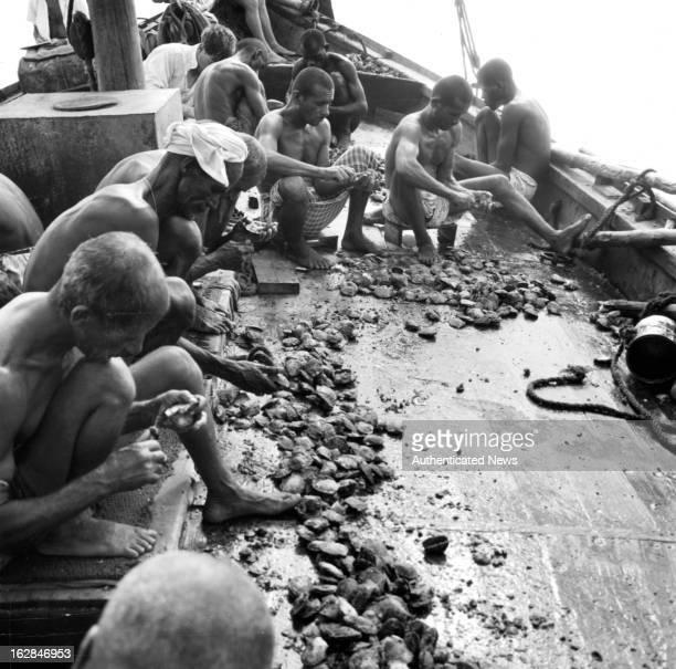 Pearl divers shell oysters for pearls on the deck of a boat in Bahrain Persian Gulf 1955