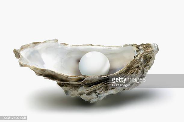 pearl in oyster shell, close-up - oyster pearl stock photos and pictures