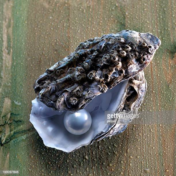 pearl in oyster shell - pearl jewelry stock pictures, royalty-free photos & images