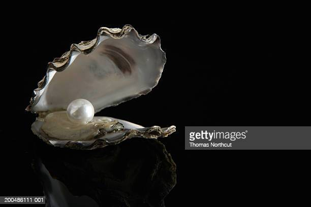 pearl inside oyster shell - oyster pearl stock photos and pictures