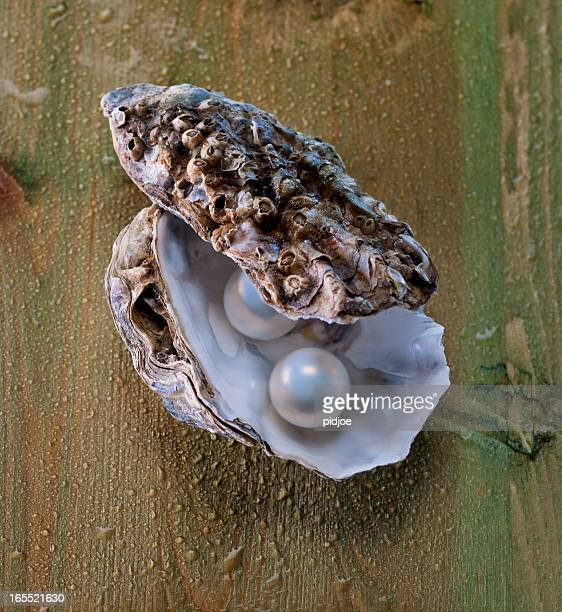 pearls in oyster shell - pearl jewelry stock pictures, royalty-free photos & images