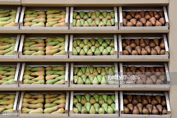 Pears are on display during the opening day of the 'Fruit Logistica' trade fair in Berlin on February 8 2017 The fair on the fresh food produce...