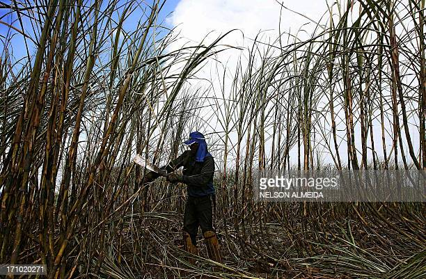 A peasant cuts sugar cane during harvest in Guariba 400 km from Sao Paulo on June 6 2008 While other countries are hiking prices at the pump Brazil...