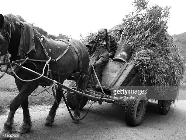 CONTENT] Peasant driving a horse cart with a load of hay on a road This is still a typical sight in rural regions of Bulgaria Old person rural scene...