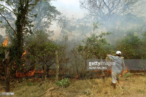 A peasant empties a bucket of water on a forest fire 04 October 2007 near the village of Porongo 15km from Santa Cruz Bolivia Forest fires out of...
