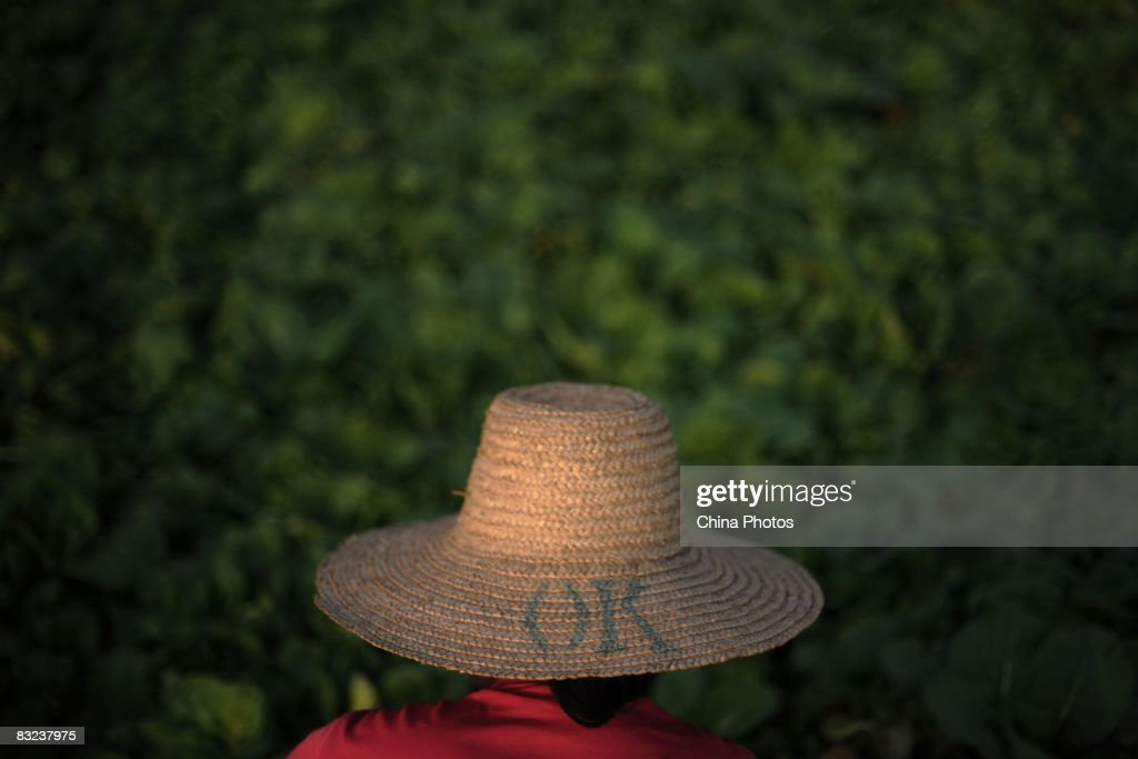 A peasant farmer harvests bok choy in a field on October 12, 2008 in Wuhan of Hubei Province, China. The Communist Party of China Central Committee (CPC) approves a decision on major issues concerning rural reform on October 12 in Beijing. The CPC sets a goal to establish a legal system to better protect farmers' property land rights and to avoid local governments and officials from abusing power. The Party also promises to invest more government budget in public services in rural areas, including education, health care, employment, housing and pension.