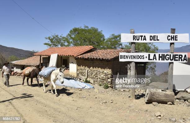 A peasant herds his donkeys along the road that links the villages of Vallegrande and la Higuera in southern Bolivia where Argentineborn Cuban...