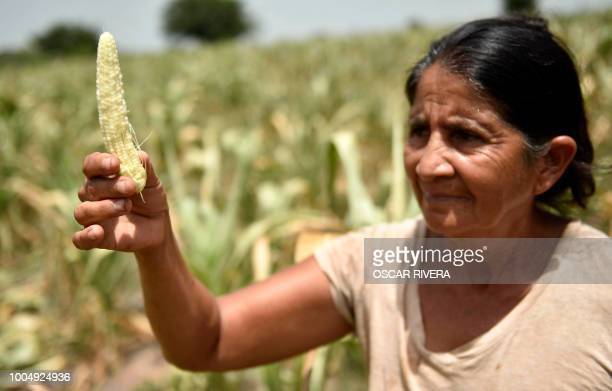 A peasant who lost her crops because of the drought shows a corn crop in the town of Usulutan 110 km southeast from San Salvador El Salvador on July...