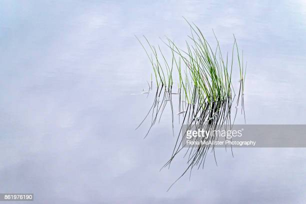 peat bog marsh grass - bog stock photos and pictures