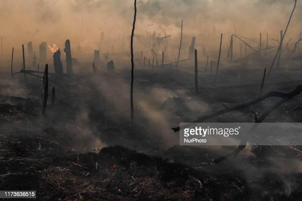 Peat land fire is seen at Rumbai Pesisir village Pekanbaru, Riau, Indonesia, on October. 04, 2019 During Indonesia's annual dry season, hundreds of...