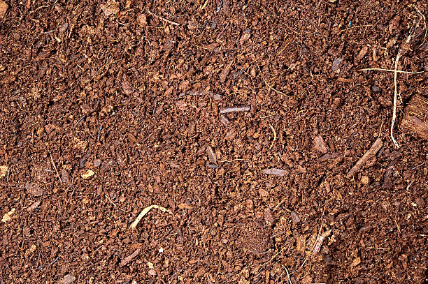 brown earth soils essay • red brown earth soils have a topsoil of sandy loam to light clay loam overlying a clay subsoil • the lighter (coarser) textured topsoil is between 10 and 40 cm thick.