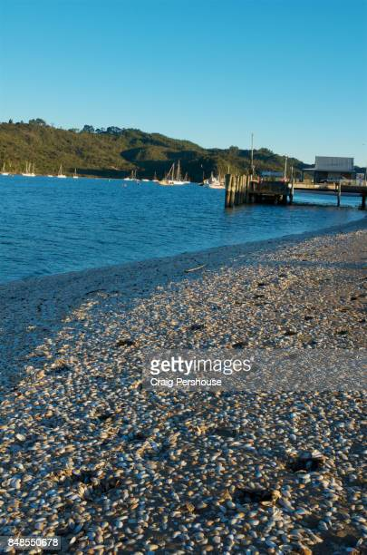 Pebble beach by Mercury Bay.