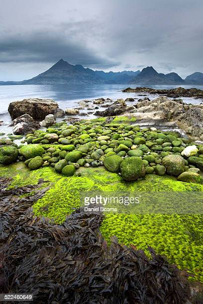 Pebbles covered by algae at Elgol Beach, Scotland
