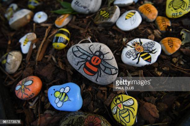 Pebbles decorated with the Manchester bee, a symbol of Manchester, are photographed at the base of a 'tree of hope' planted as a memorial following...