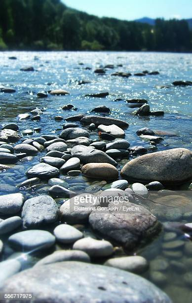 Pebbles On Riverbank Against Trees