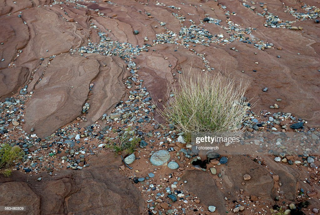 Pebbles on the rock : Stock Photo