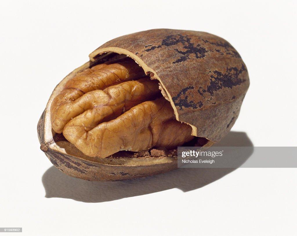 Pecan nut : Stock Photo