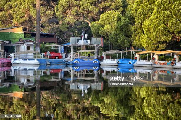pedal boats and reflections on a pond in public park,izmir. - emreturanphoto stock pictures, royalty-free photos & images