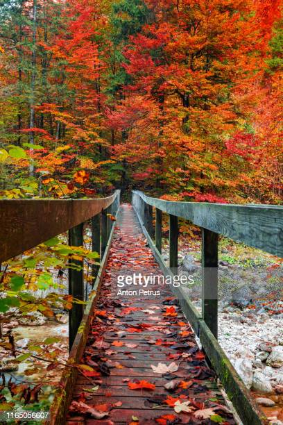 pedestrian bridge in the autumn forest. beautiful autumn landscape - autumn stock pictures, royalty-free photos & images