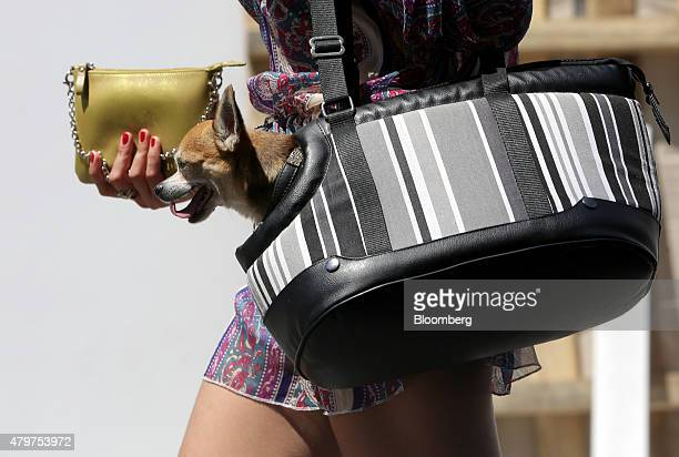 Pedestrian carries a gold purse and a Chihuahua dog in a carrier along a shopping street in the area known as the Golden Quarter, Vienna, Austria, on...