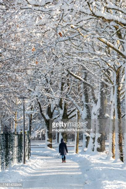 pedestrian walking, path in a park through snowy trees, harlaching, munich, bavaria, germany - 背景に人 ストックフォトと画像
