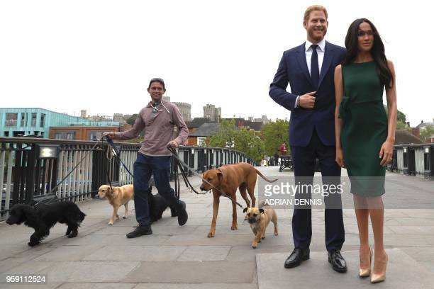 TOPSHOT A pedestrian walks dogs past waxwork figures of Britain's Prince Harry and his US fiance Meghan Markle during a photo oportunity arranged by...