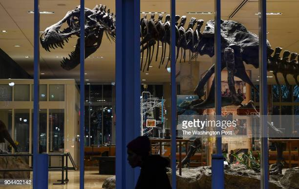 A pedestrian walks past a Tyrannosaurus model on the ground floor of the Discovery Channel headquarters on January 11 2018 in Silver Spring Md The...