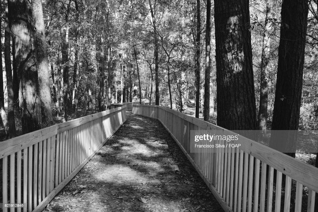 Pedestrian walkway through forest : Stock Photo